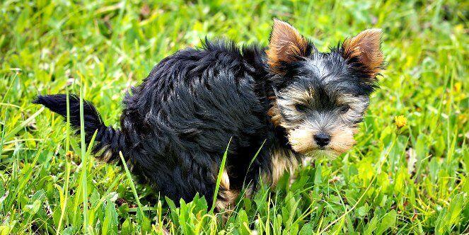Hund Hat Blut Im Stuhl Grund Zur Sorge Ursache Losung