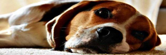 Hund hat Durchfall – Ursachen & Hausmittel
