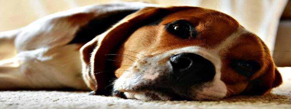 Hund hat Durchfall Hausmittel und Ursachen