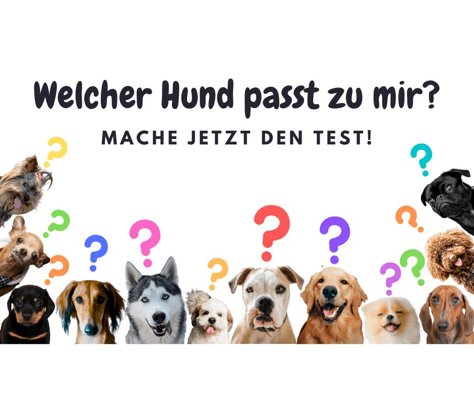 Welcher Hund passt zu mir? Mache jetzt den kostenlosen Test!
