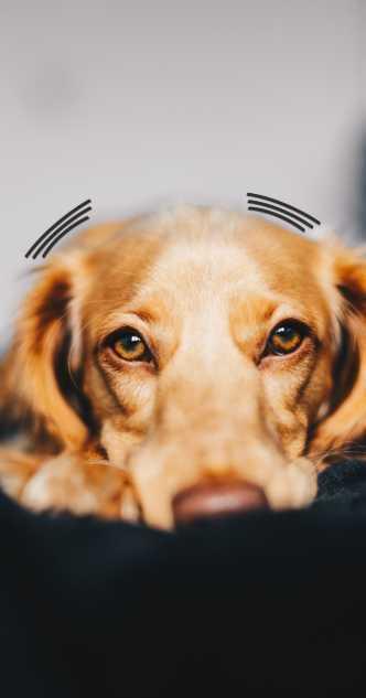 Warum zittert mein Hund vor Angst?