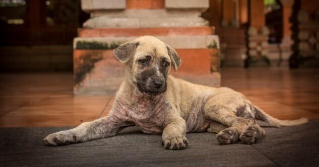 Darauf solltest du achten wenn du einen Hund adoptierst
