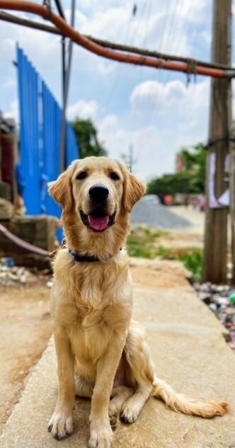 Hund aus dem Ausland adoptieren