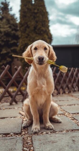 Hund aus dem Tierheim adoptieren