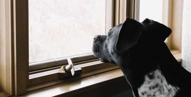 Hund alleine zuhause lassen
