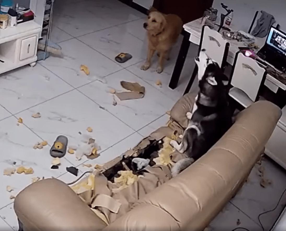 Probleme den Hund alleine zu lassen