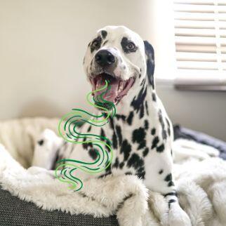 Übler Mundgeruch beim Hund