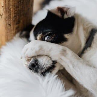 Hund Pfote lecken abgewöhnen