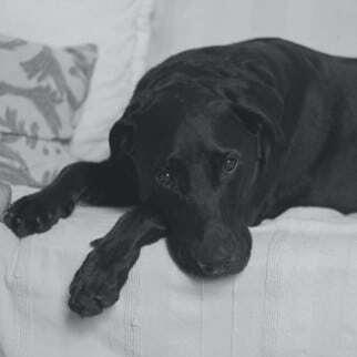 Diabeteskrankheit beim Hund