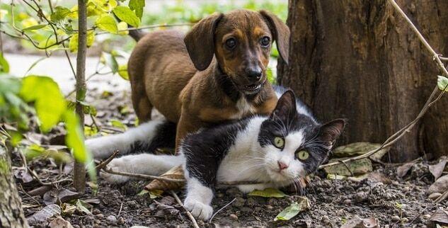 Tipps um Hund an Katze zu gewöhnen