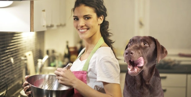 Hundefutter schnell und einfach selber kochen
