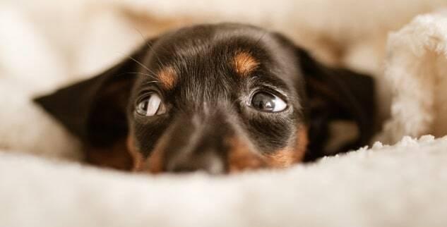 Mein Hund hat eine Blasenentzündung - was tun?