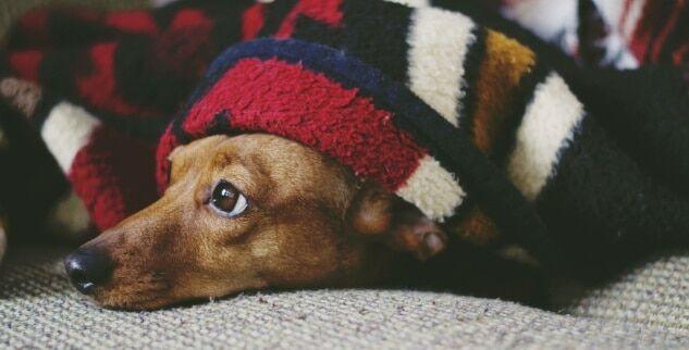 Wie kann ich einer Blasenentzündung beim Hund vorbeugen und verhindern?