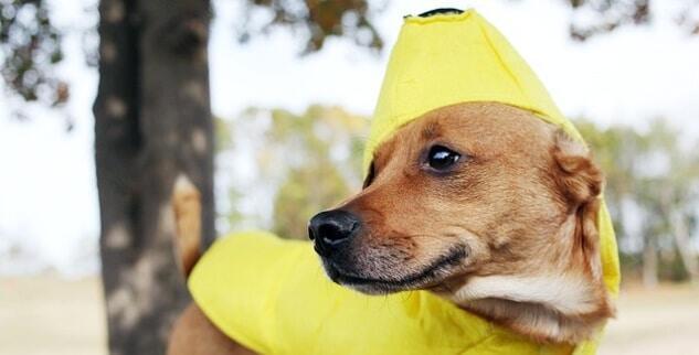 Darf ein Hund Banane essen?