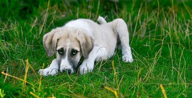 Hund atmet laut und schwer durch die Nase