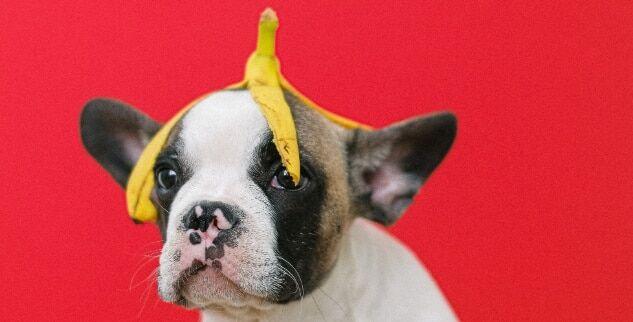 Mögen Hunde Bananen?
