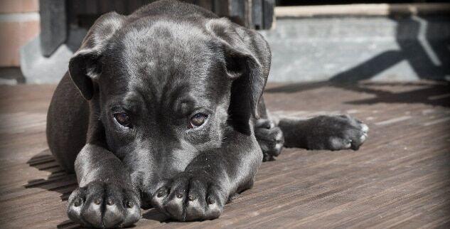 Wie kann ich eine Blasenentzündung beim Hund feststellen?