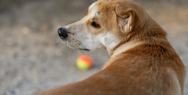 Ursache - Hund dreht sich im Kreis