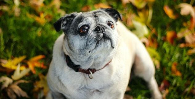 Verstopfung beim Hund lösen mit Hausmitteln