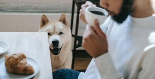 Wie kann ich meinem Hund das Betteln abgewöhnen?