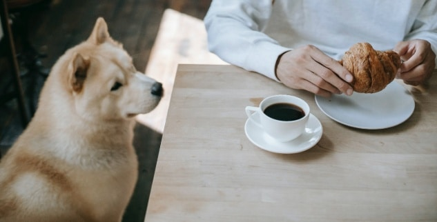 Hund bettelt am Tisch abgewöhnen