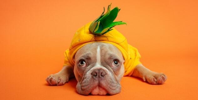 Wieviel Ananas darf mein Hund fressen?