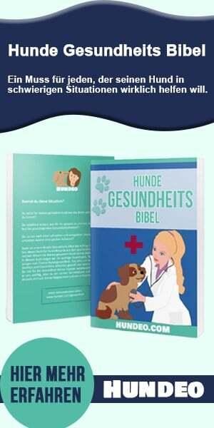 Buch über Hundegesundheit