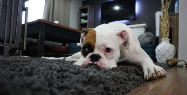 Wie kann ich meinen Hund beschäftigen?