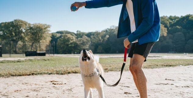 Hunde Tricks und Kommandos beibringen