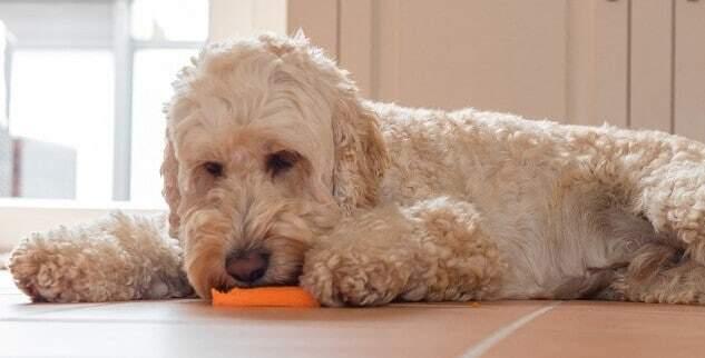 Ist veganes Hundefutter gesund?