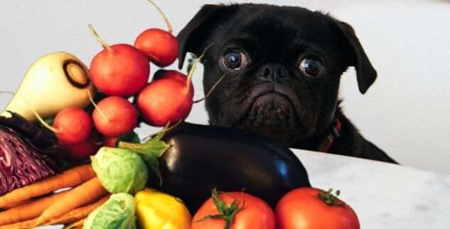 Hund vegan ernähren gesund?