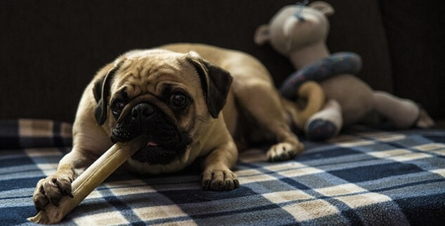 Hund frisst nur noch Leckerlis und kein Hundefutter