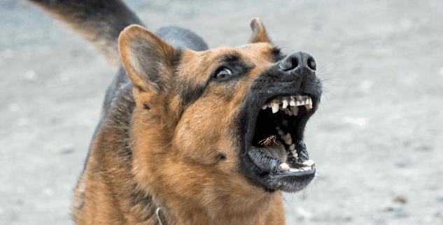 Hund wurde von Wespe ins Maul gestochen