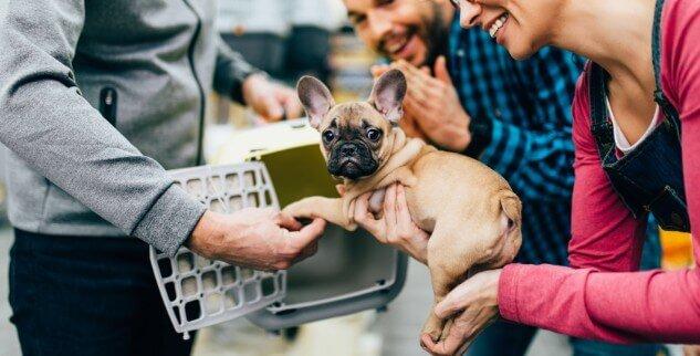 Übernahme Hund von Privat