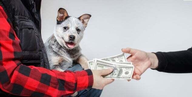 Was Du beachten solltest, wenn Du einen Hund von Privat übernimmst.