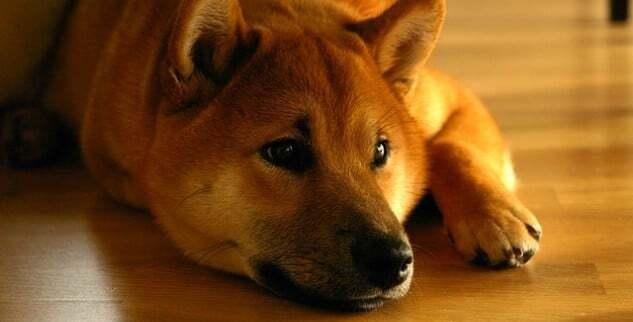 Gastritis beim Hund