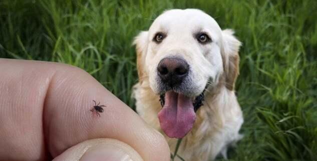 Wie Du Deinen Hund vor Zecken schützen kannst