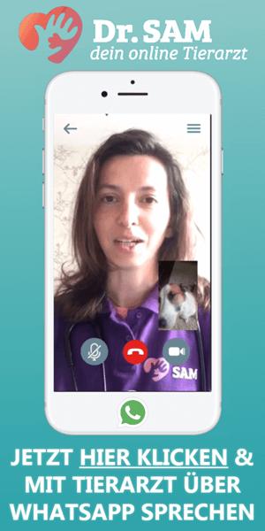 Online Tierarzt mit WhatsApp Sprechstunde