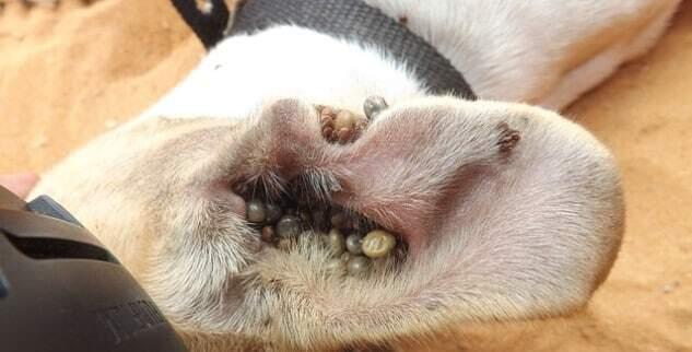 Tabletten gegen zecken und natürlicher Zeckenschutz für Hunde